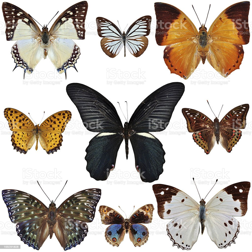Nine butterflies royalty-free stock photo