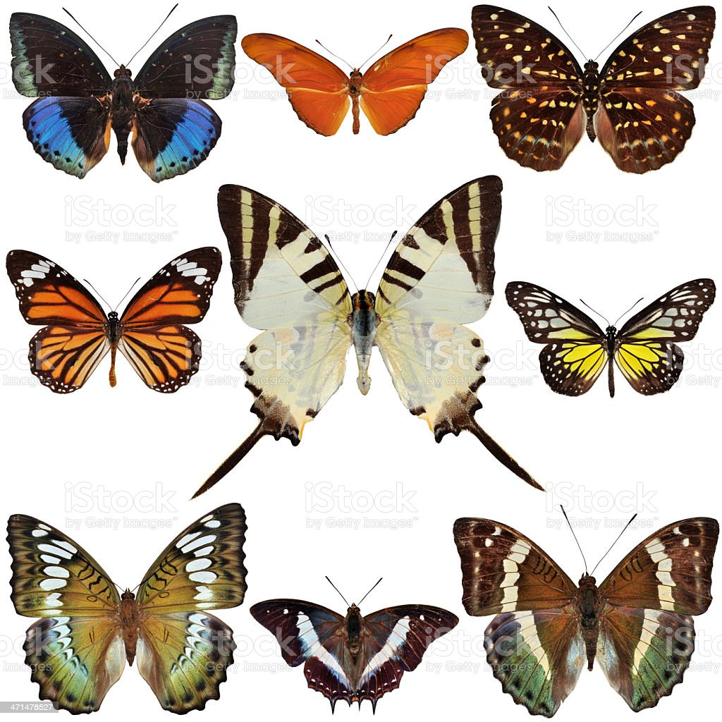 Nine butterfly royalty-free stock photo