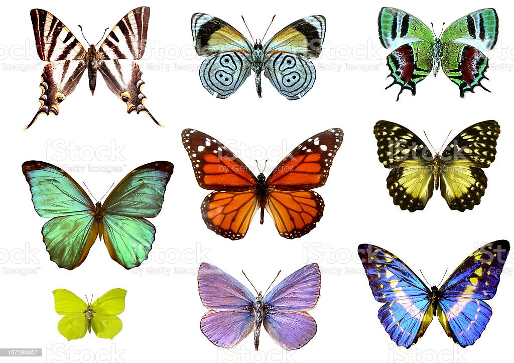 Nine colorful butterflies stock photo