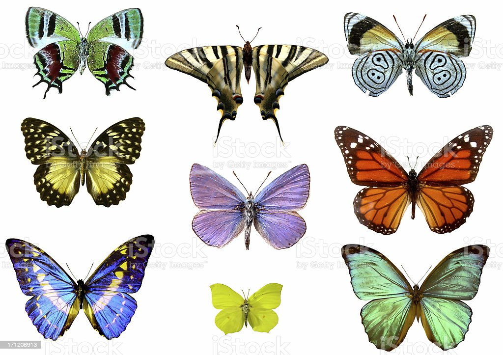 Nine Colourful Detailed Butterflies on a White Background stock photo