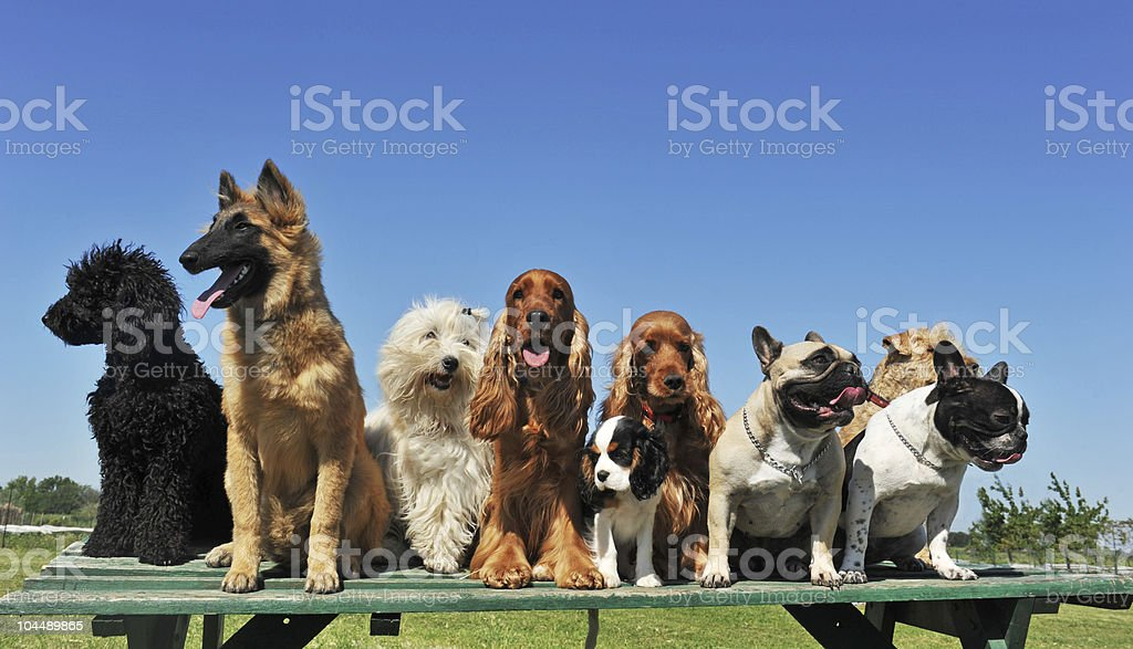 nine dogs stock photo