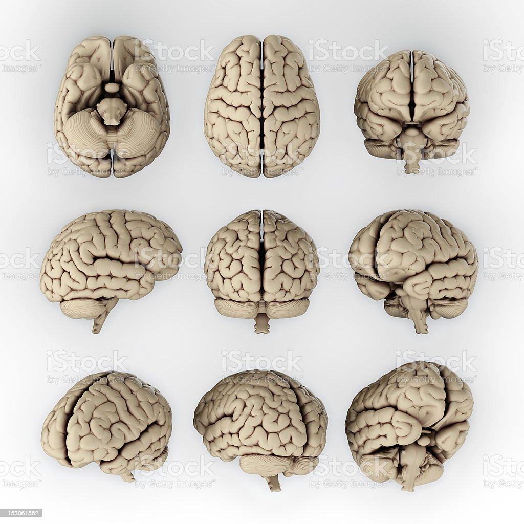 Nine illustrations of the human brains stock photo
