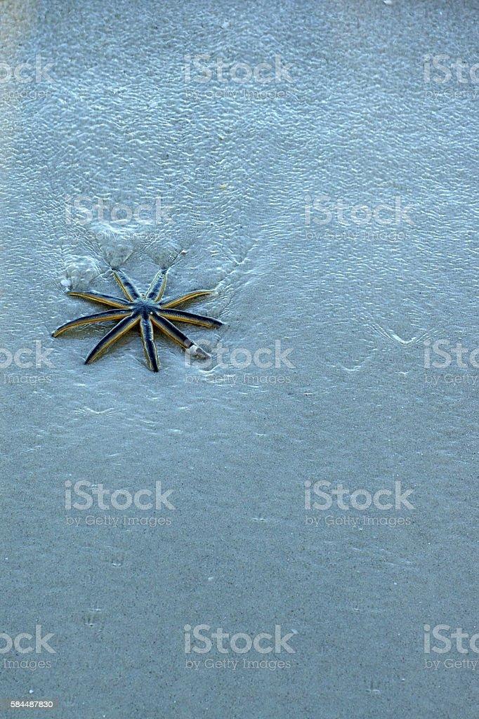 nine legged starfish on beach stock photo