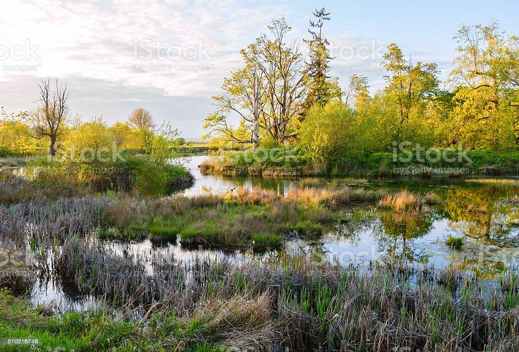 Nisqually National Wildlife Refuge stock photo