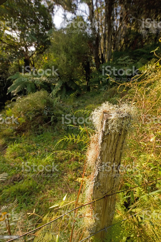 No boundries in the woods... stock photo