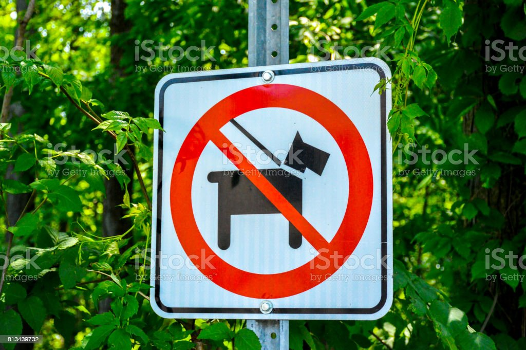 No dogs allowed in the forest stock photo