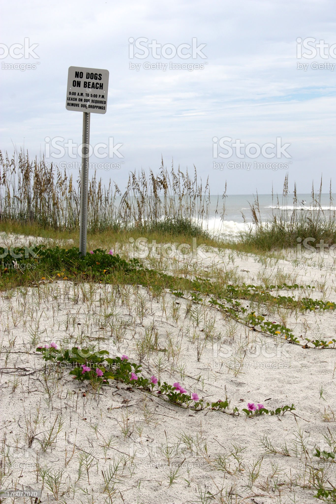 No Dogs On Beach Sign In Sand Dunes royalty-free stock photo