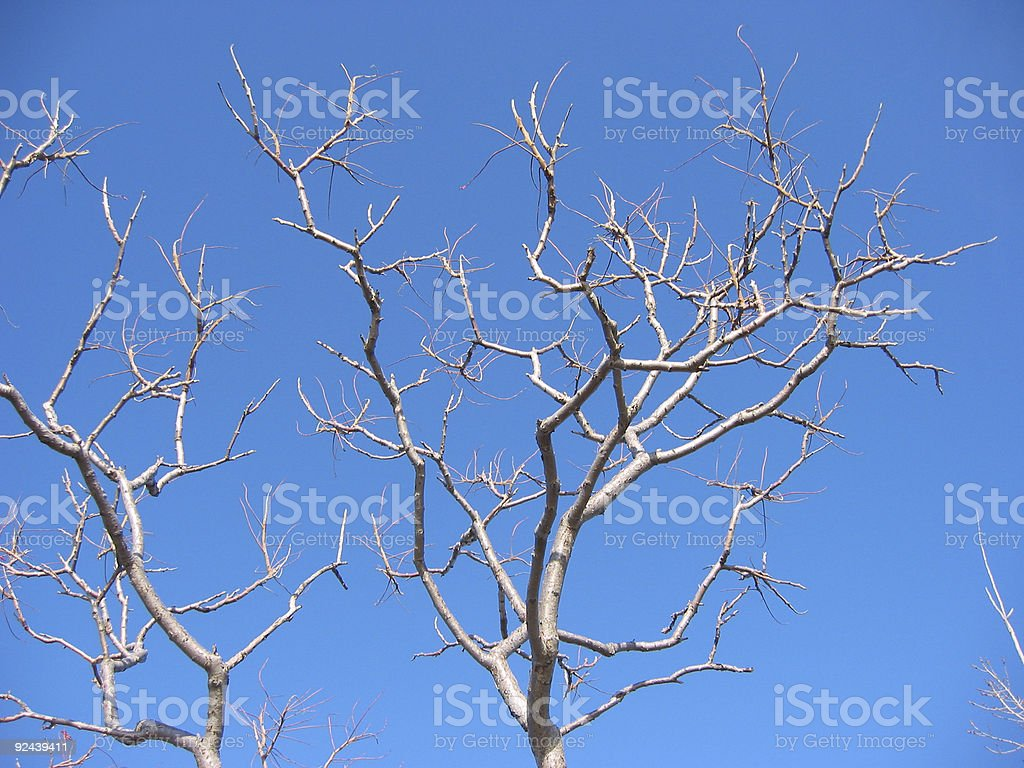 no more leaves 2 royalty-free stock photo