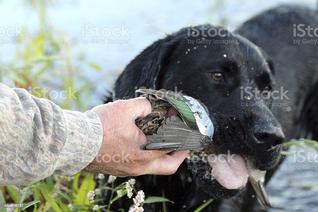 No!  This duck is mine! stock photo