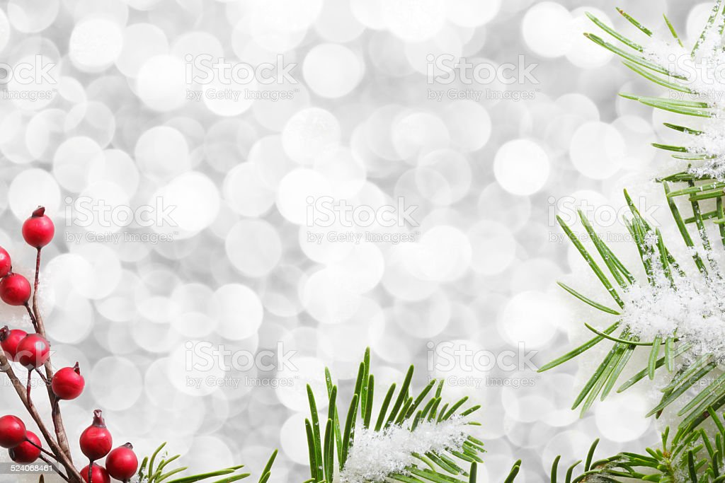 Noble Fir Bough And Berries Framing Blurred Lights stock photo