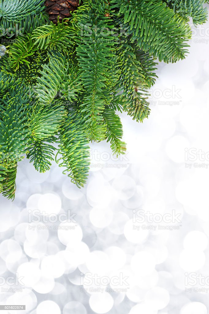Noble Fir Bough Framing Blurred Lights stock photo