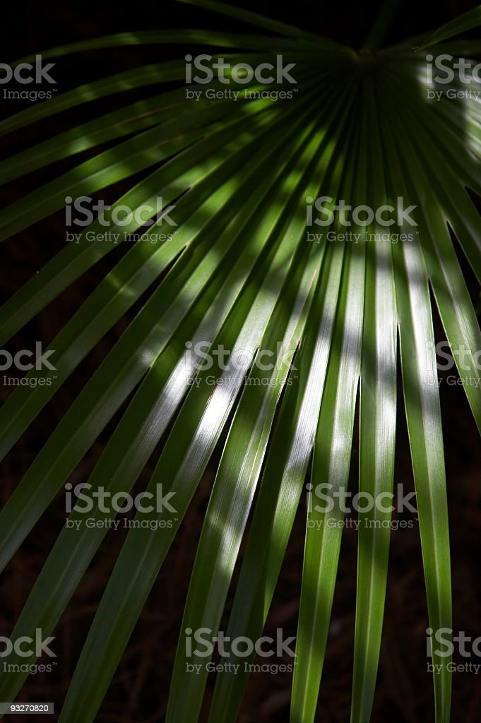 Noir Palmetto royalty-free stock photo