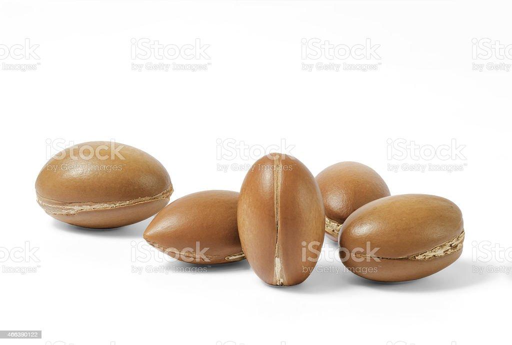 noix d'argan stock photo