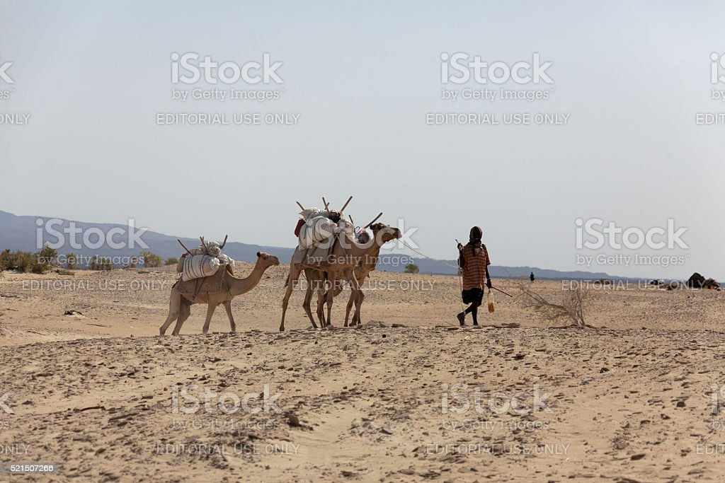 Nomad with camels  in the Danakil Desert Ethiopia stock photo
