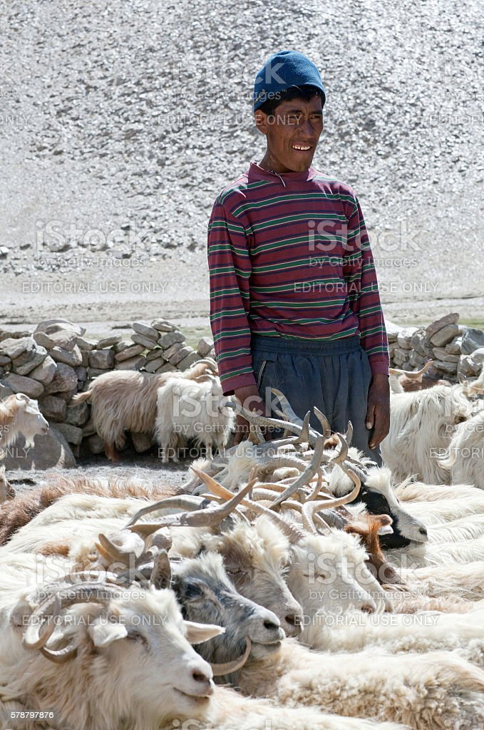 Nomad with goats in Ladakh, North India stock photo