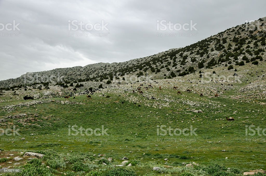Nomadic family in the highlands royalty-free stock photo