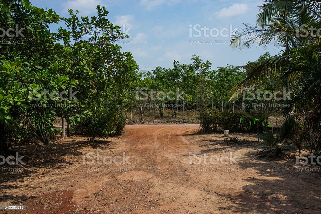 non-asphalt road to the forest. stock photo