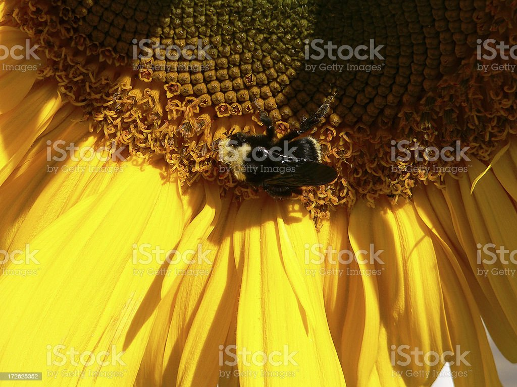 None of your beezness royalty-free stock photo