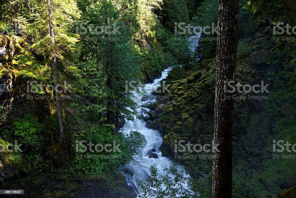 Nooksack Rainforest River stock photo