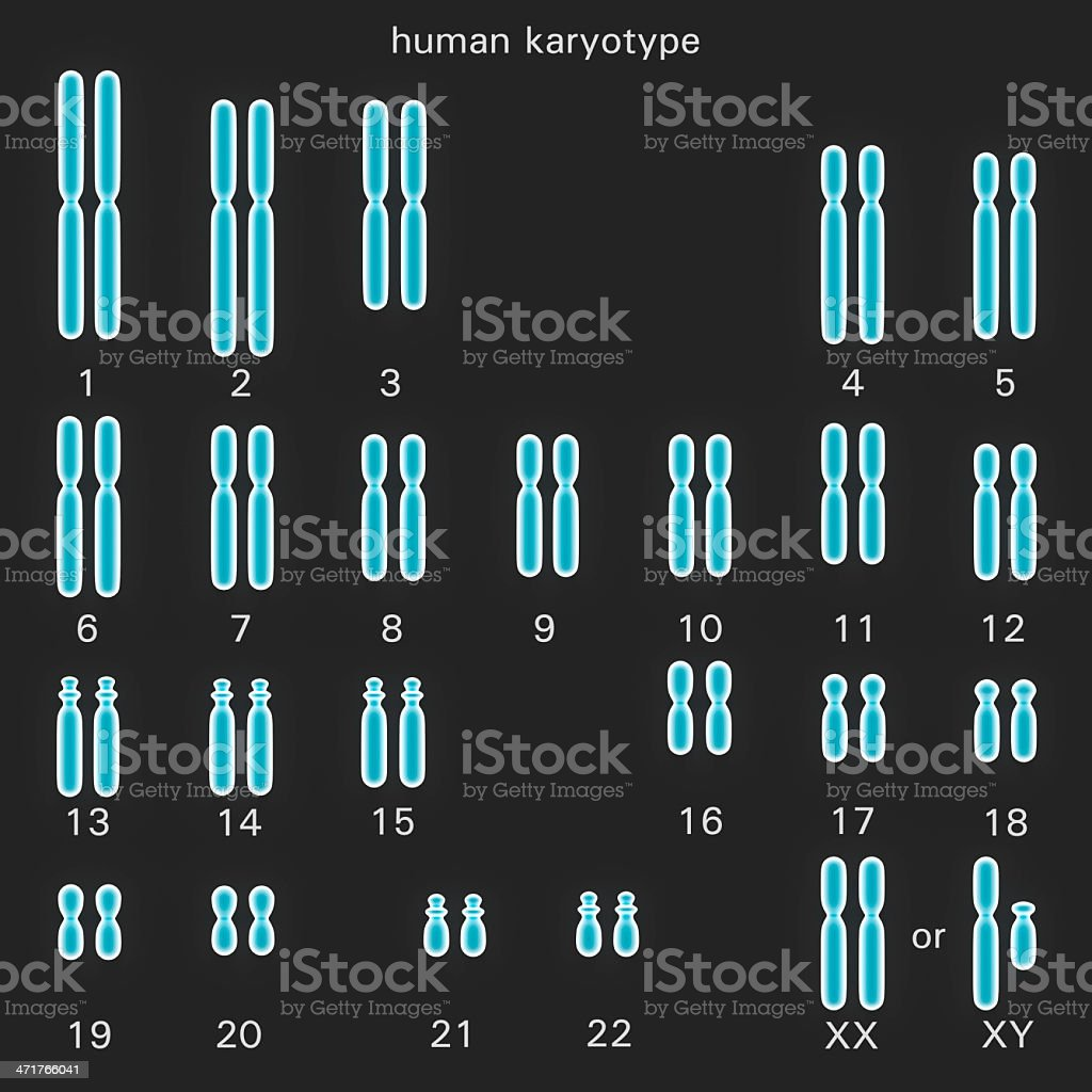 Normal human karyotype vector art illustration