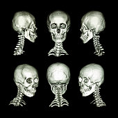 Normal human skull and cervical spine . all direction