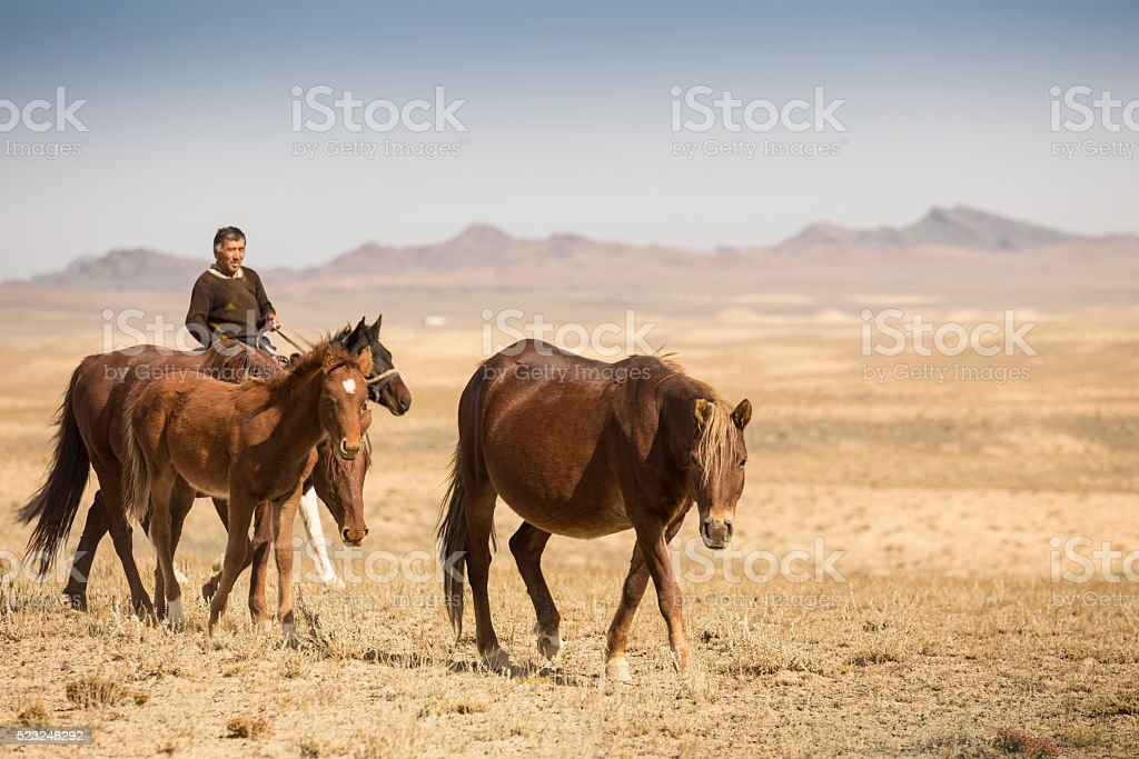 Normal steppe groom, who is tending the horses in Kazakhstan stock photo