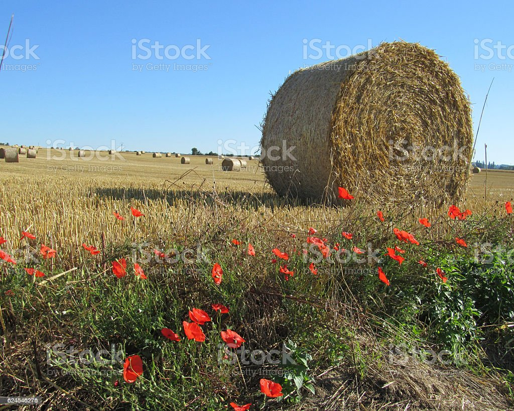 Normandy Countryside stock photo