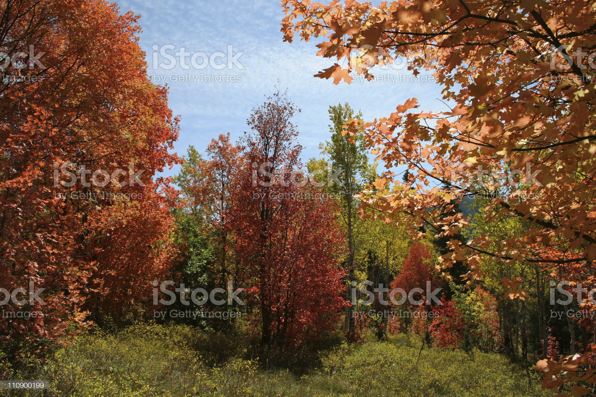 North American Fork Canyon royalty-free stock photo