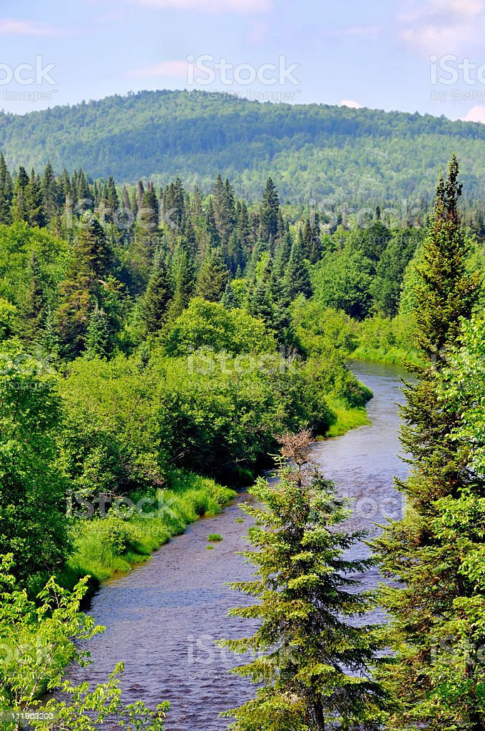 North Country Trout River royalty-free stock photo