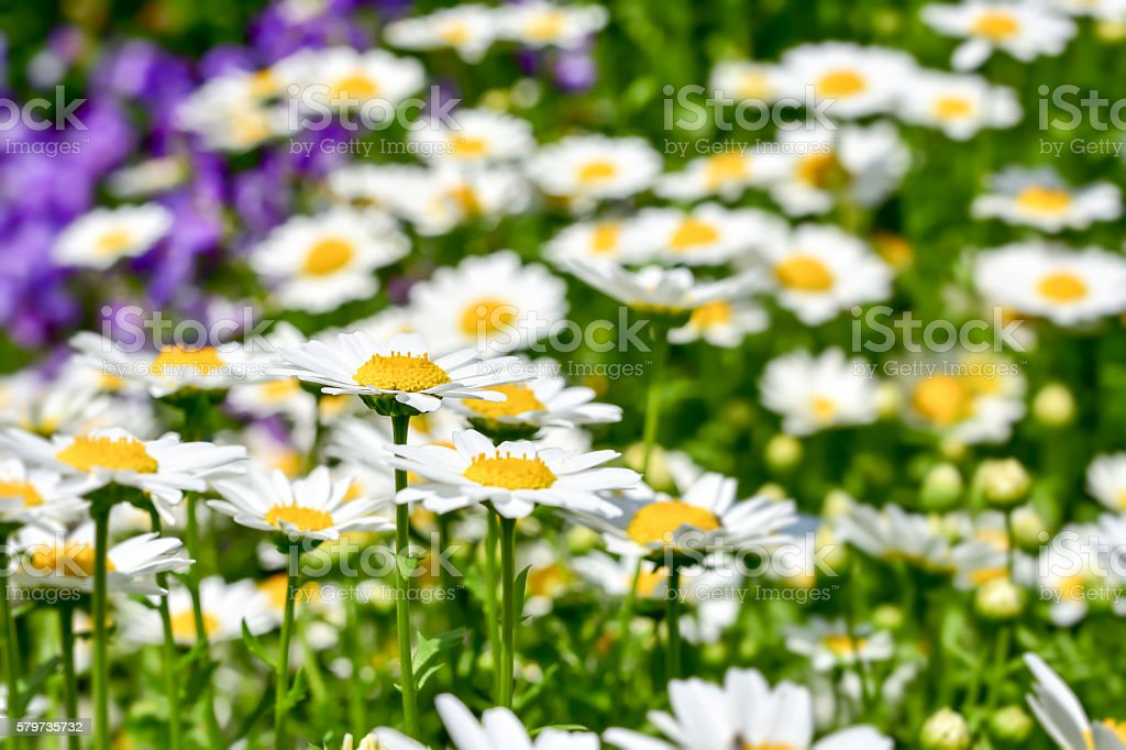 North Pole flower stock photo