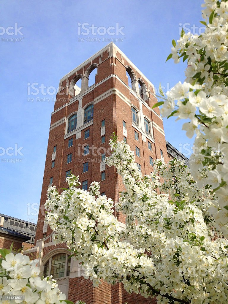 North Quad over Cherry Blossoms, University of Michigan stock photo