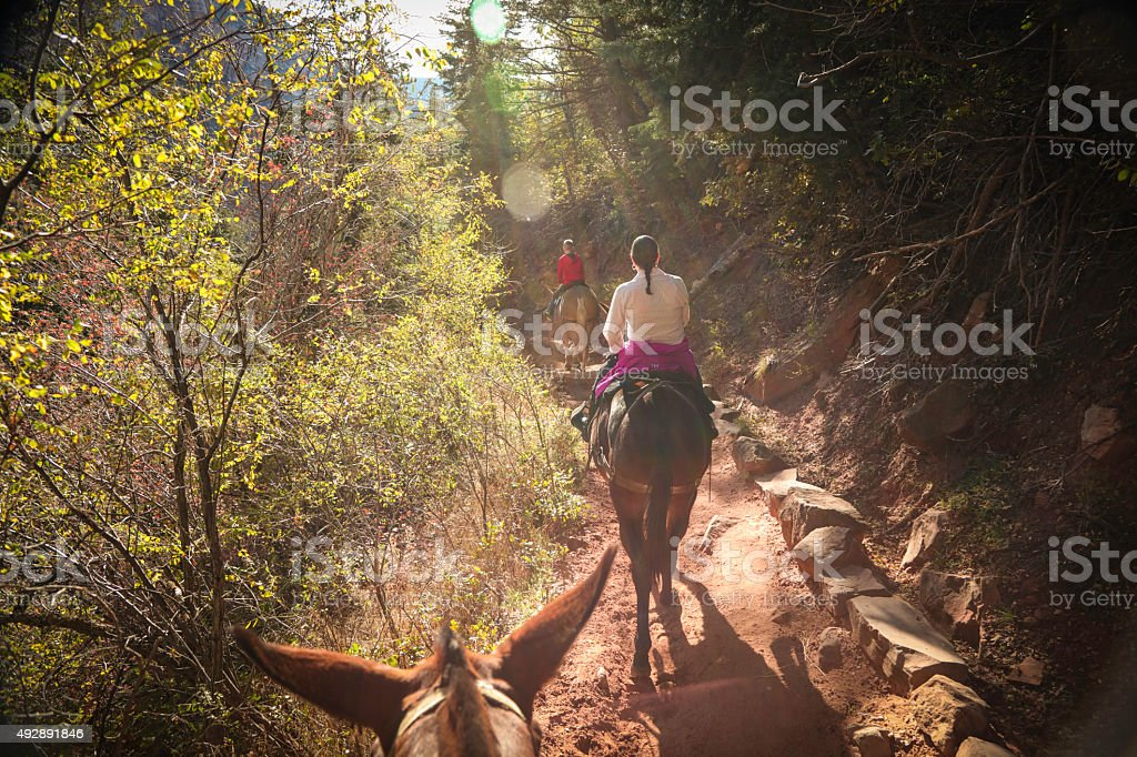 North Rim Grand Canyon family on mules stock photo