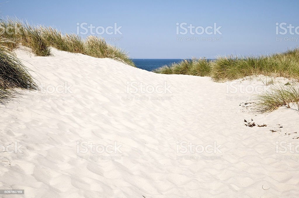 North Sea Dunes in Denmark stock photo