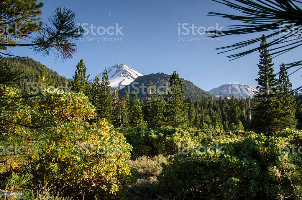 North Shasta meadows stock photo