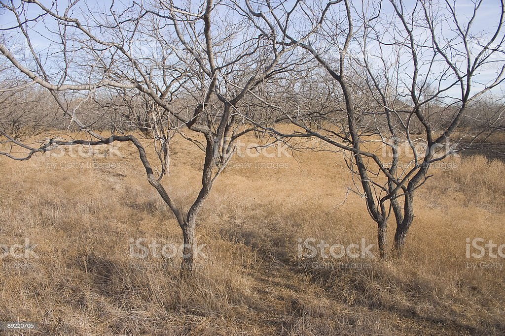North Texas winter color royalty-free stock photo