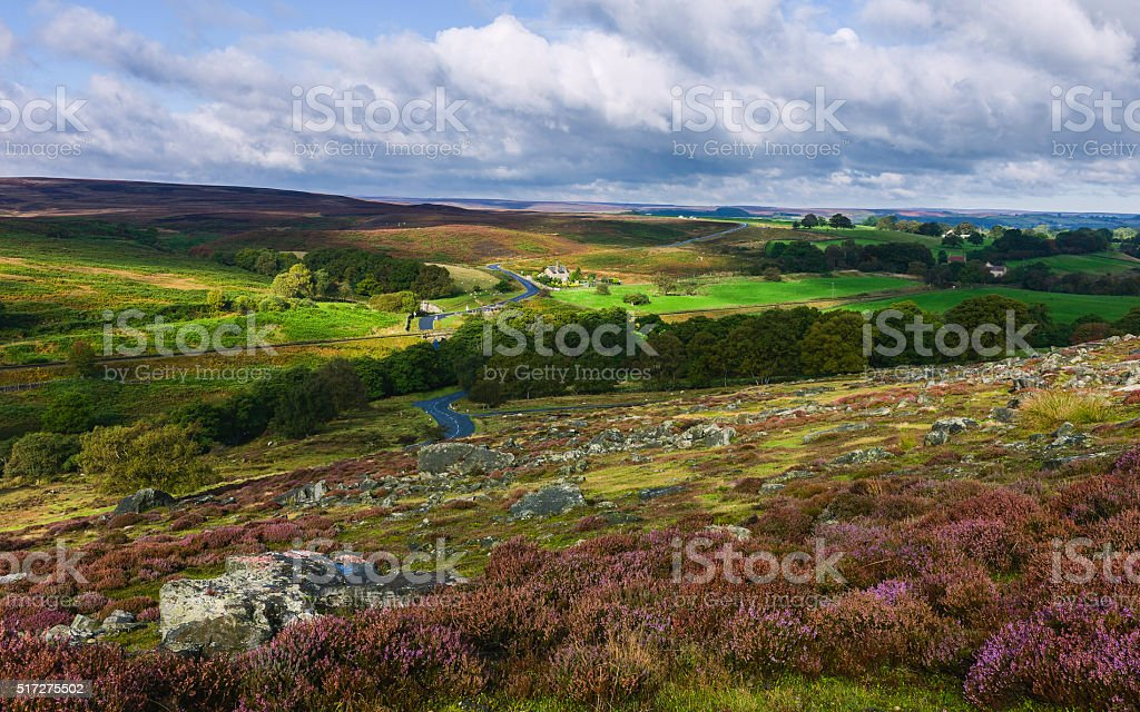 North Yorshire Moors in bloom, Goathland, Yorkshire, UK. stock photo