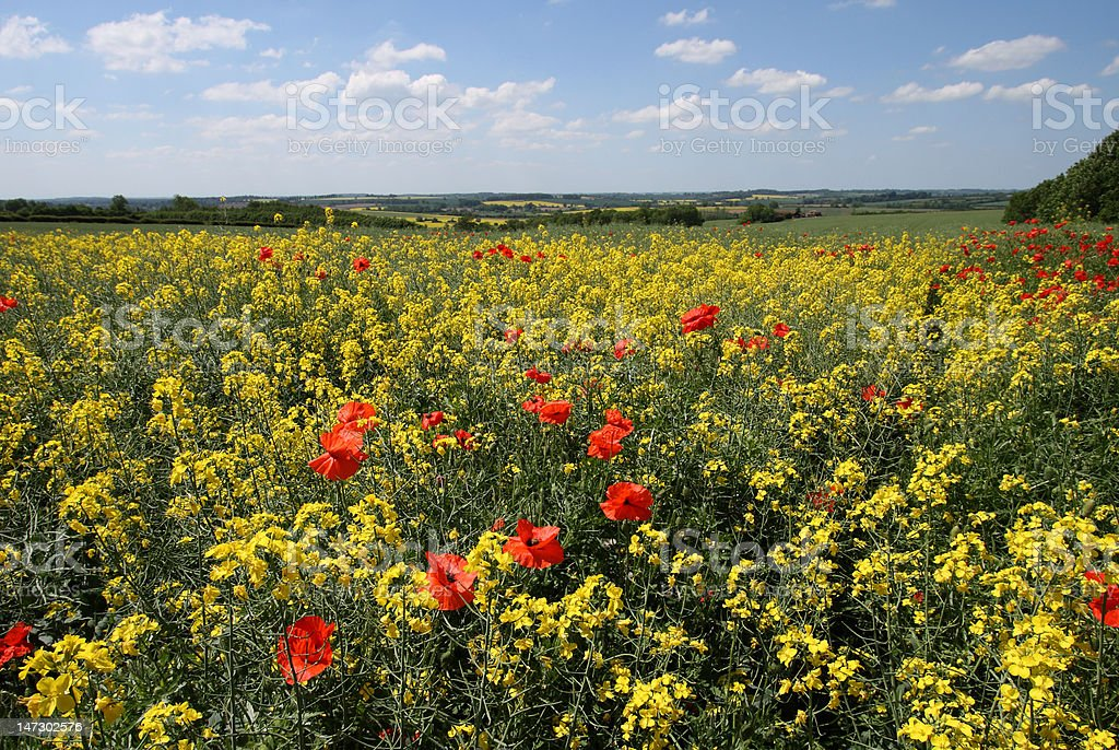 Northamptonshire Summer Countryside stock photo