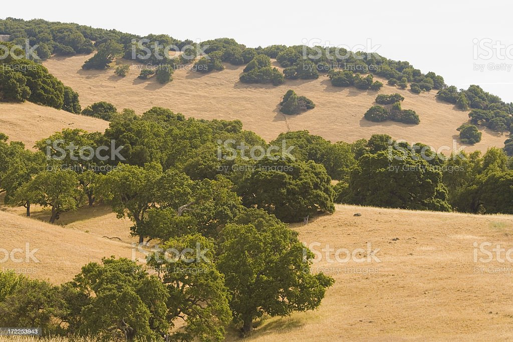 Northern California Oak Woodlands and Golden Hills royalty-free stock photo