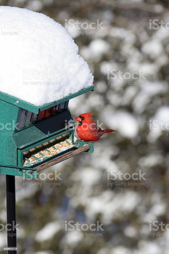 Northern Cardinal on Winter Snow Bird Feeder royalty-free stock photo