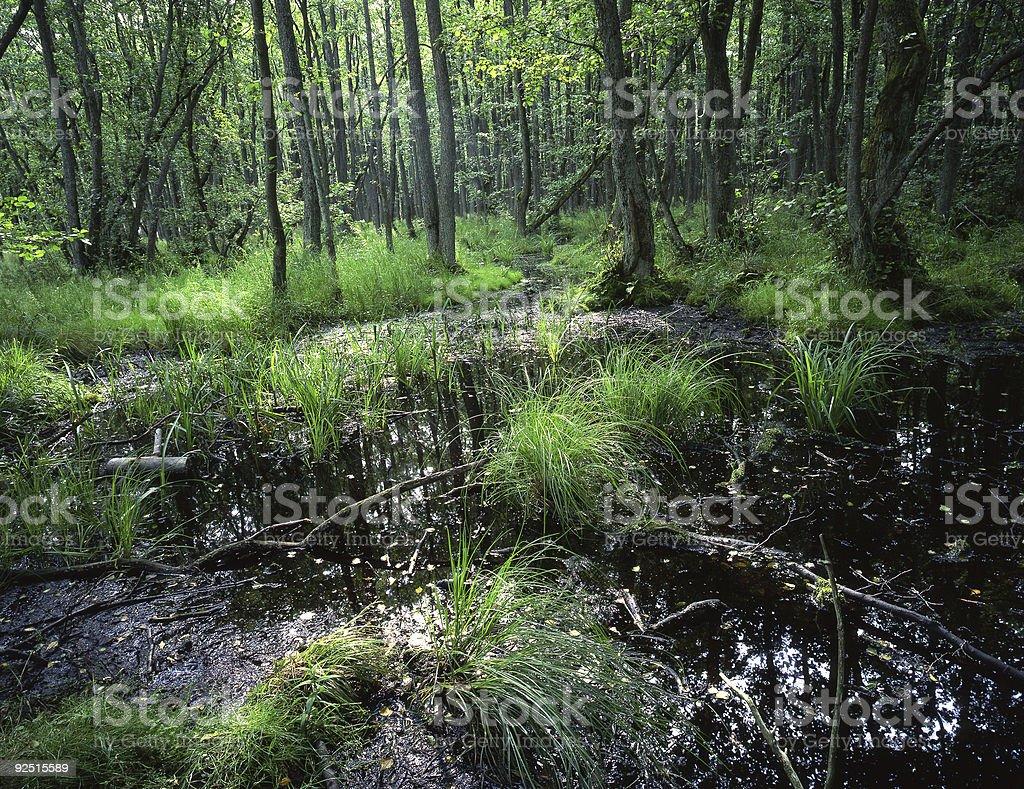 Northern Europe Woods stock photo