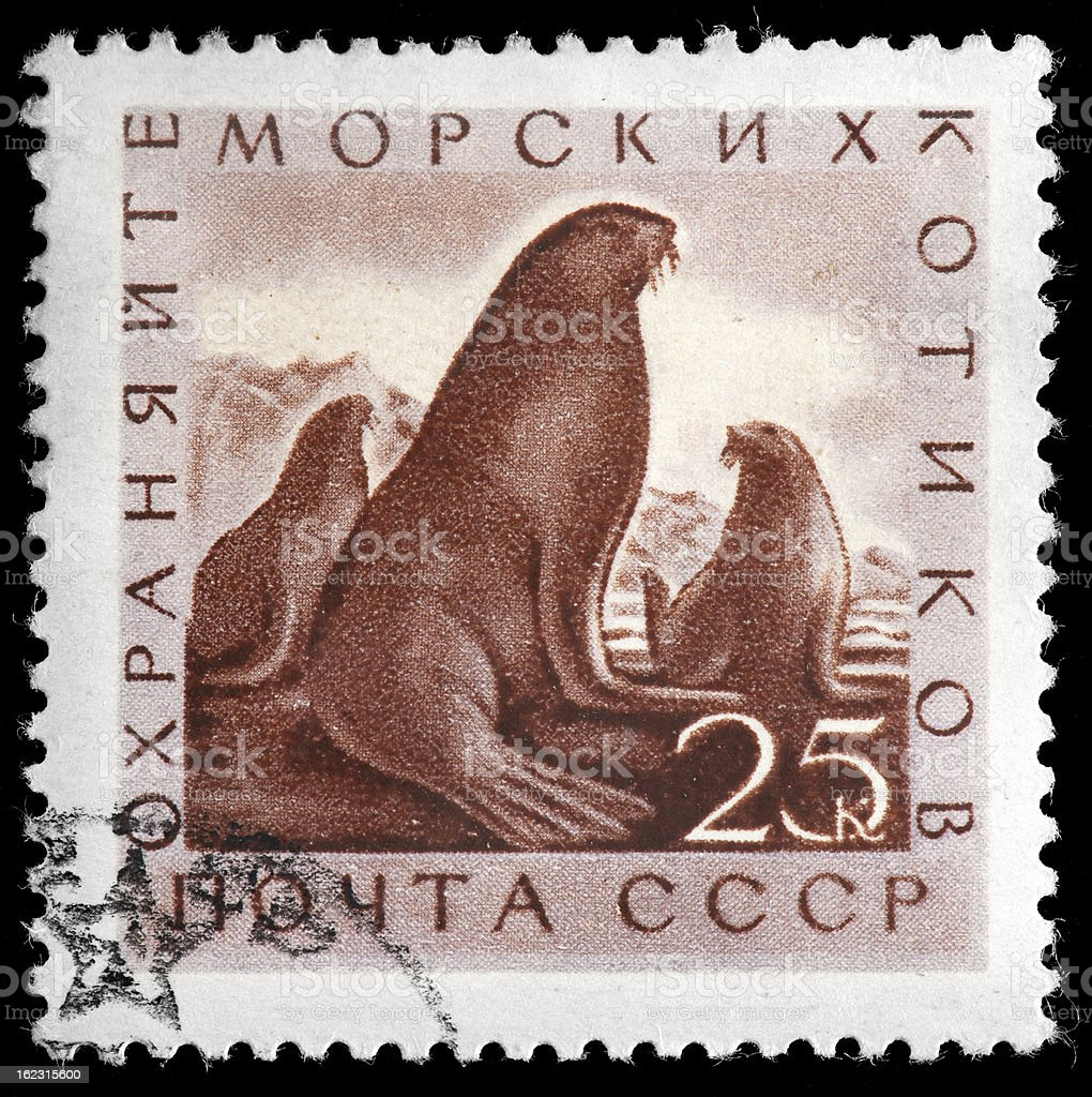 Northern fur seals depicted on Russian Vintage Postage Stamp stock photo
