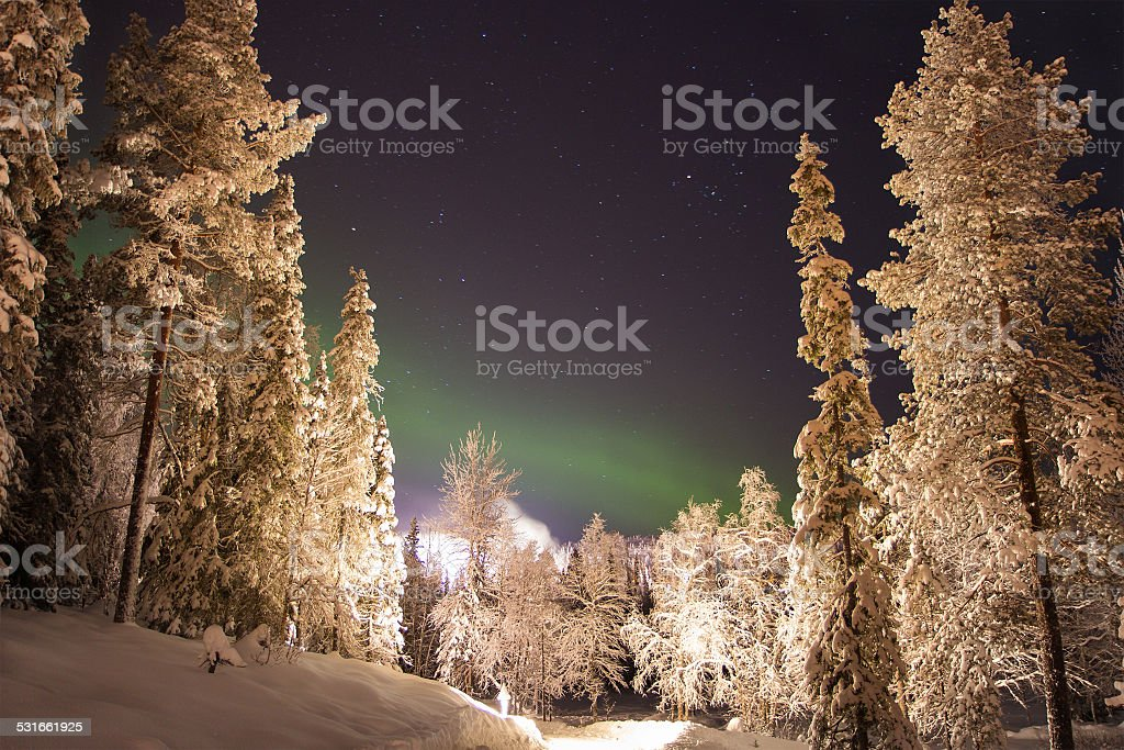 Northern light between pine trees in the Woods, Lapland, Finland stock photo