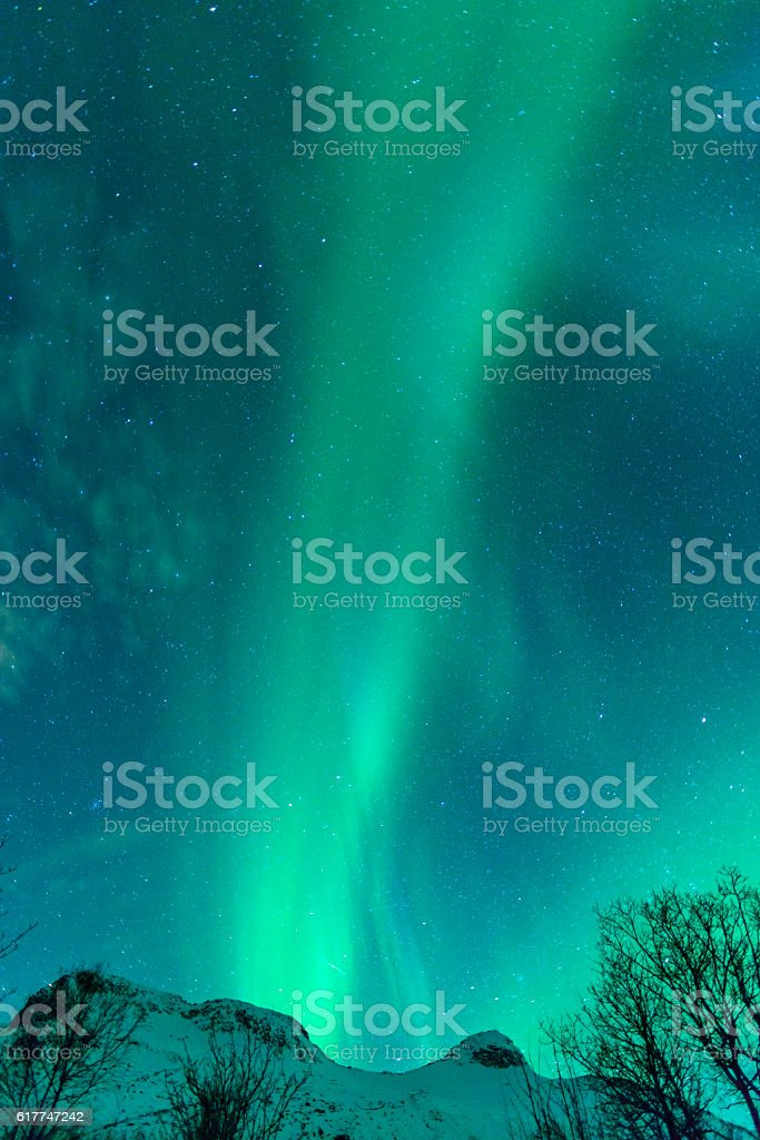 Northern Lights in the night sky over the Lofoten Norway stock photo