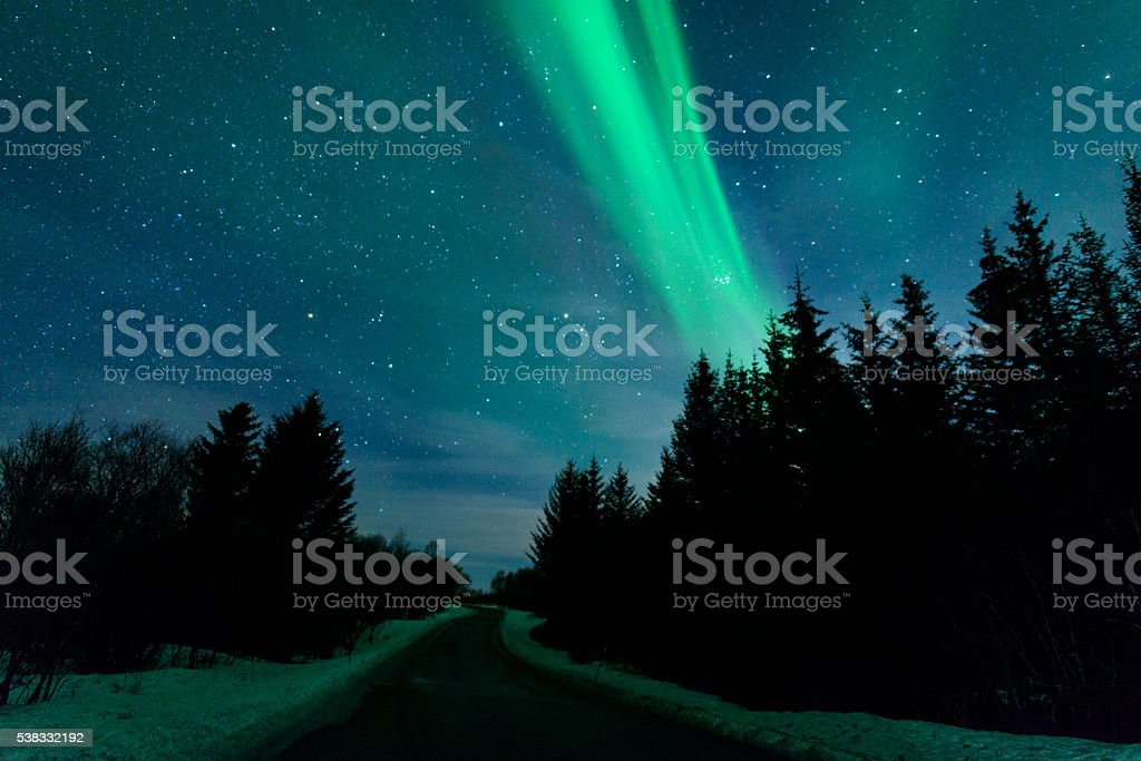 Northern Lights over pine trees in Norway during winter stock photo