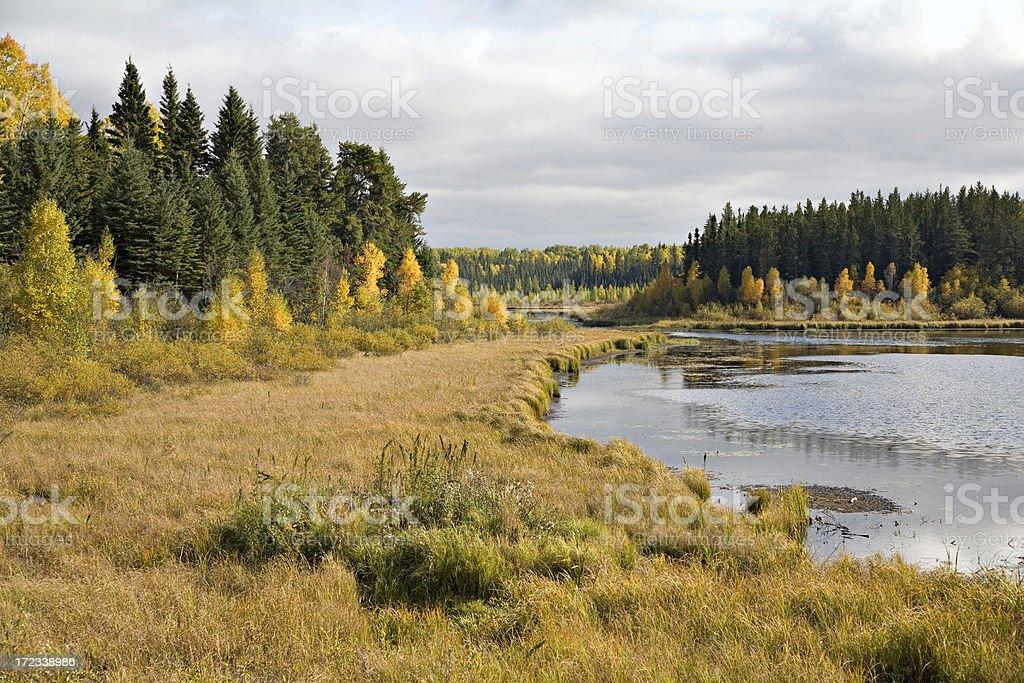 Northern Marsh in Autumn stock photo