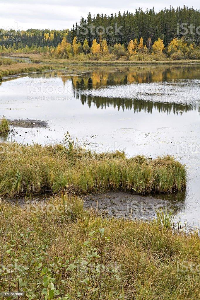 Northern Marsh stock photo