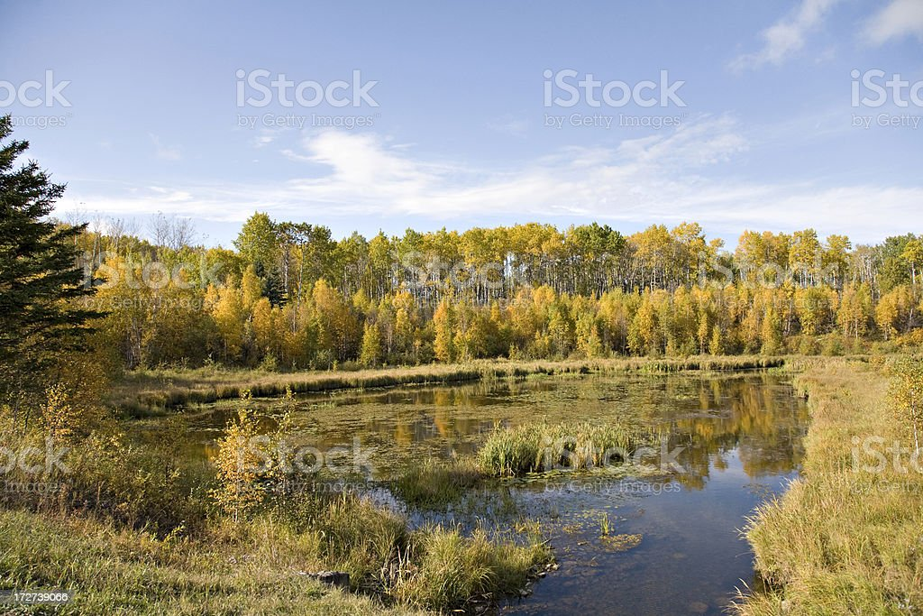 Northern Marsh royalty-free stock photo