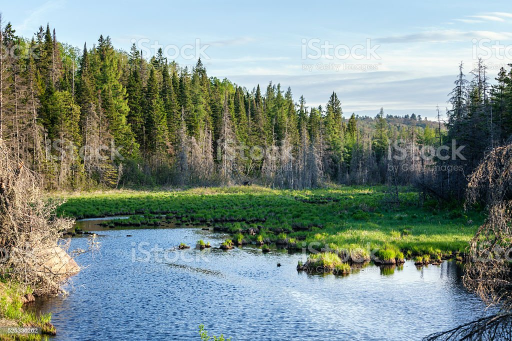 Northern New York State Evergreen Wilderness Pond stock photo