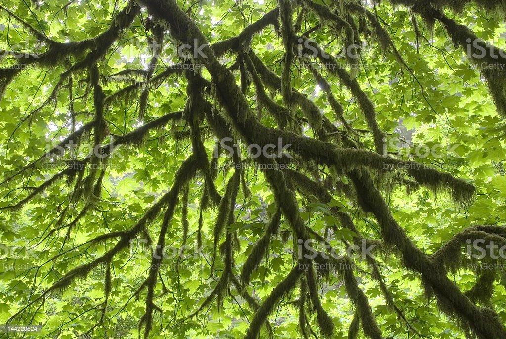 Northern Rainforest Spring stock photo