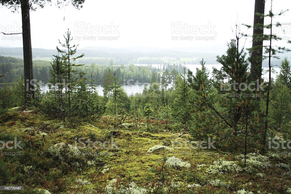 Northern Sweden Landscape stock photo